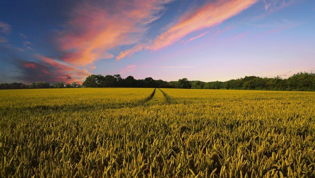 Agricultura, factor de poluare
